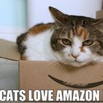December Amazon Update